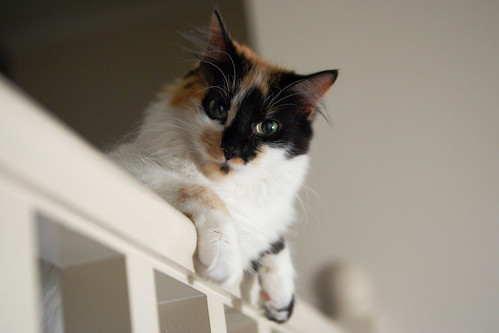 [フリー画像素材] 動物 1, 猫・ネコ ID:201210241000