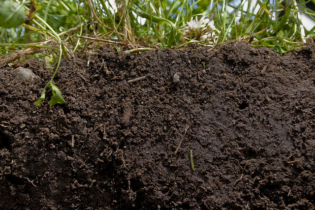 see what healthy soil looks like flickr photo sharing