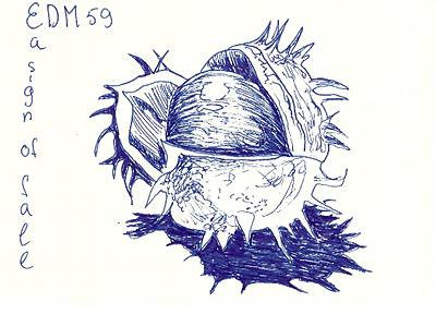 EDM59 - a sign of fall (drawing of chestnut seed)