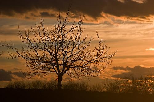 sky orange cloud tree 20d silhouette horizontal clouds canon hungary stormy zala
