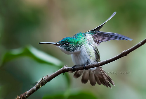 You Are In My Space !!  { Andean Emerald } by Judylynn M.