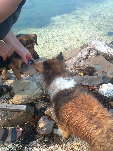 Megi jede mušlje