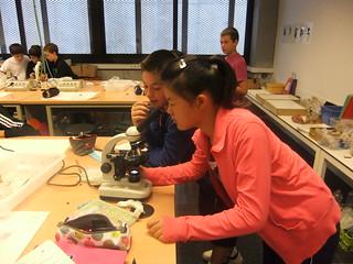 observant llevats al microscopi (2)