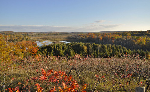 autumn trees ontario nature colors landscape lindsay wetlands fallcolours windyridgeconservationarea