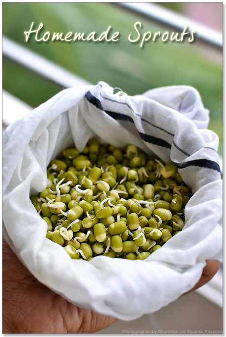 how to make your own sprouts