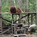 Orangutan World, Tanjung Puting Borneo Adventure-258.jpg