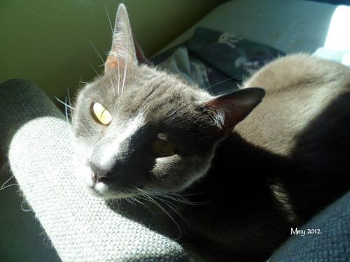 Emma sunbathing