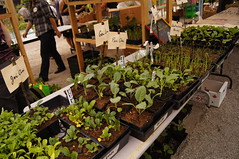 Winter Plant Sale