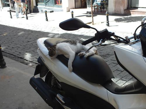 Alvás egy hosszú motorozás után