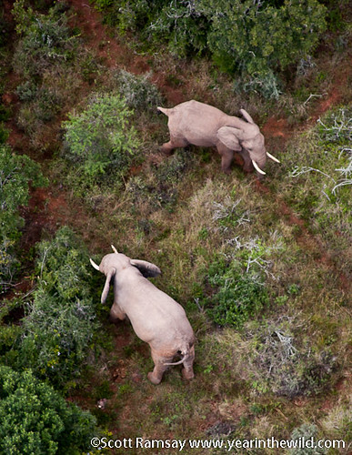 Addo Elephant National Park - South Africa | by scottnramsay