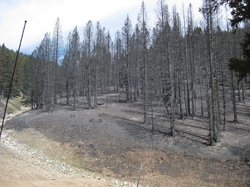 Ski Apache, Little Bear Fire