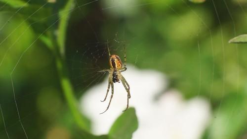 Video araignée 20120906101904 (1)