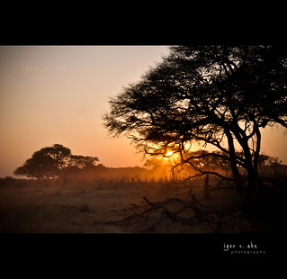 Hwange Sunset