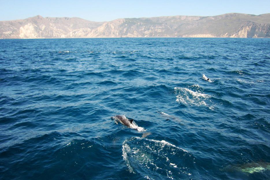 081812_05_dolphinPod02