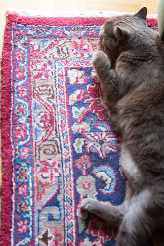 Noon - an old cat on an old rug by Brin d'Acier