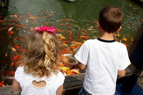 Looking-at-fish