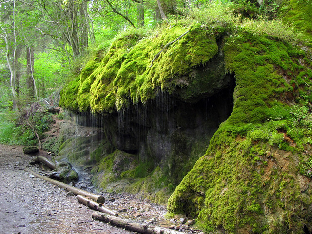 Rocks surrounded by lush green Moss