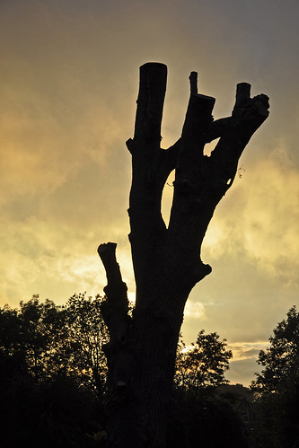 trees sunset sun tree nikon cassington d90 nikond90 mullineux chrismullineux