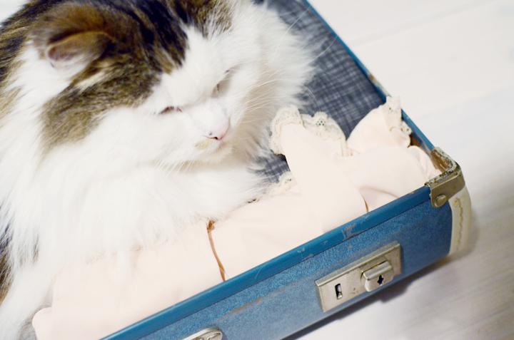 babycat suitcase b