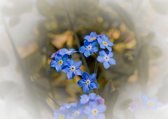 flower, purple, yellow, plant, lilac, lavender, flora, forget-me-not, close-up, blue, petal,