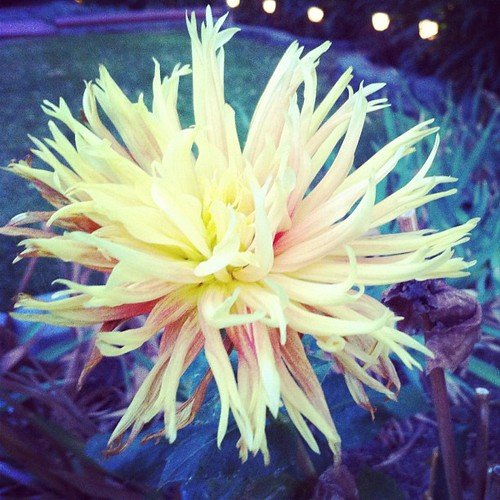 269/366 :: fall bloom