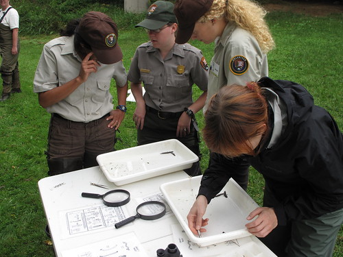 Service intern Gwen Casebeer works with a stream insect beside Natioonal Park Service staff and volunteers