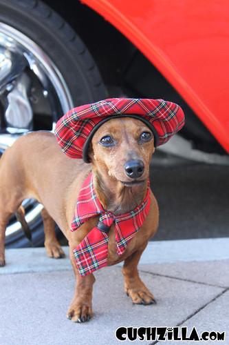 cushzilla-cat-necktie-dog-necktie-97-02