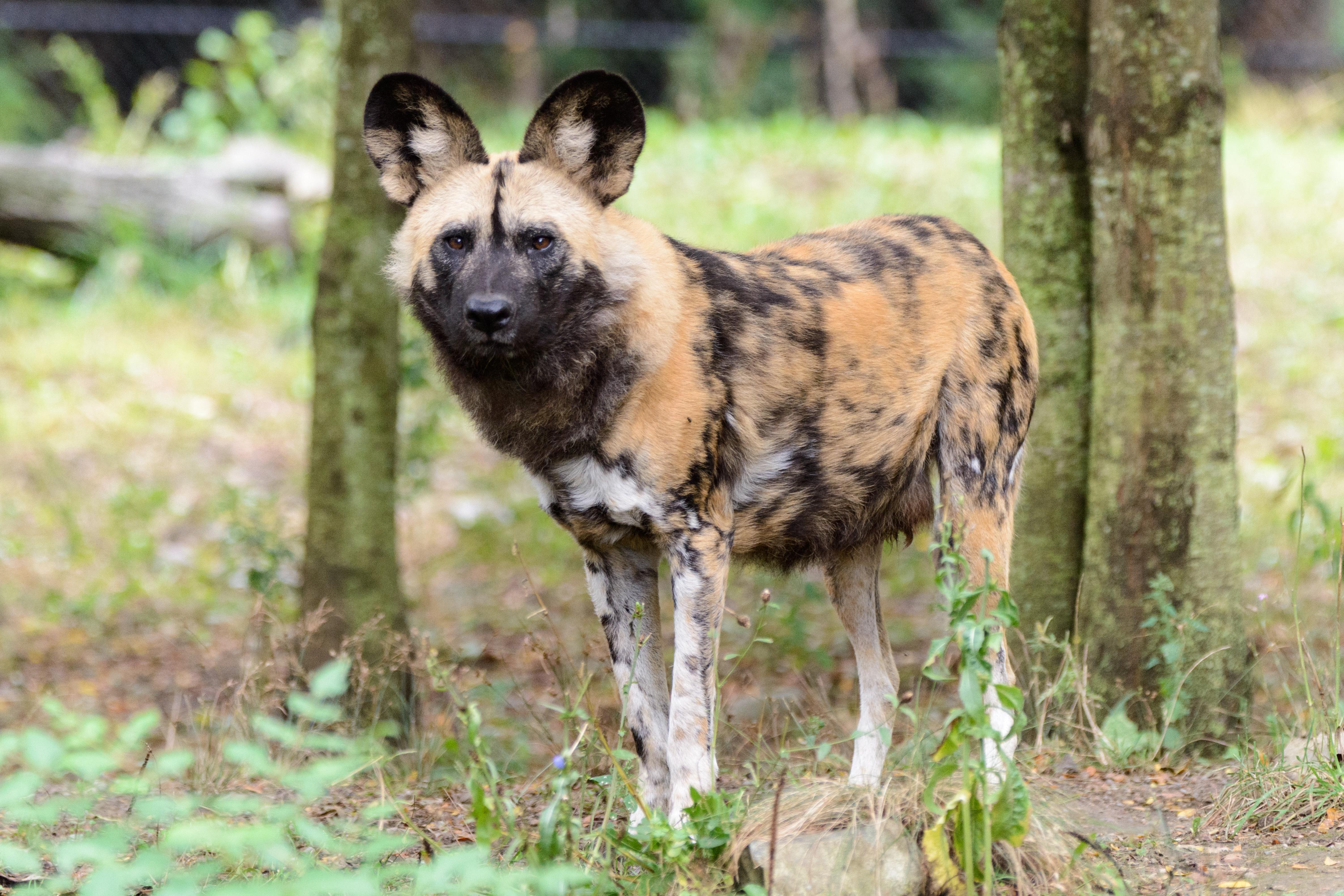Wolf Cub Dog Food Reviews