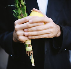Lulav and Etrog at Zucotti Park