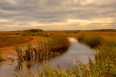 Autumn in the Marsh