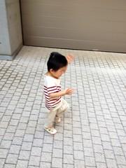 朝散歩 - 踊るとらちゃん (2012/10/5)