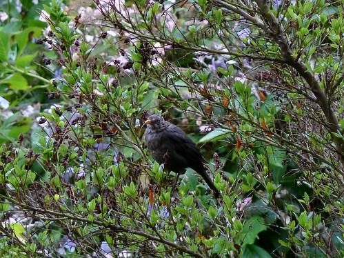Birdlife at Heligan Garden