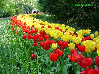 Dutch Tulips, Keukenhof Gardens, Netherlands - 3994
