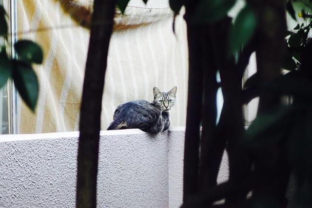 Today's Cat@2016-09-09
