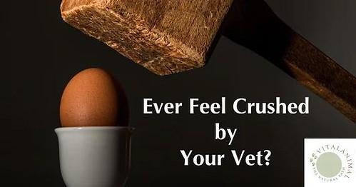 Roger Biduk - Vet crushed by ever feel; Dr. Will Falconer