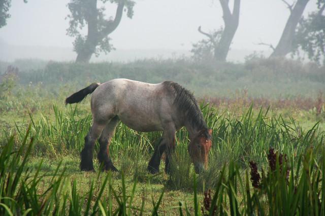 A horse in Bourgoyen