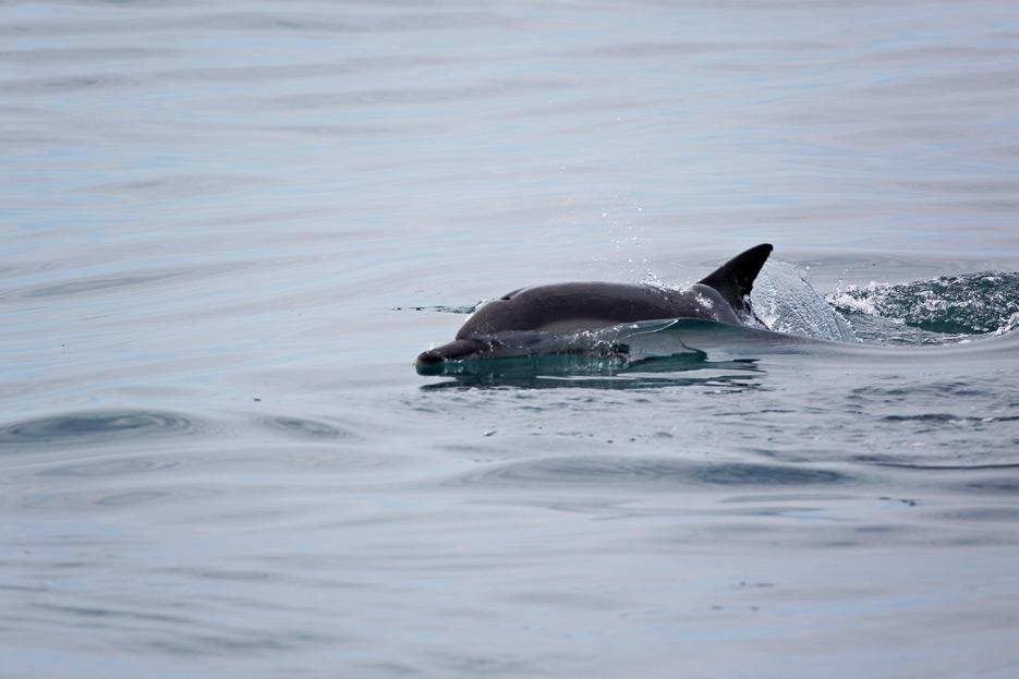 081812_05_dolphin01
