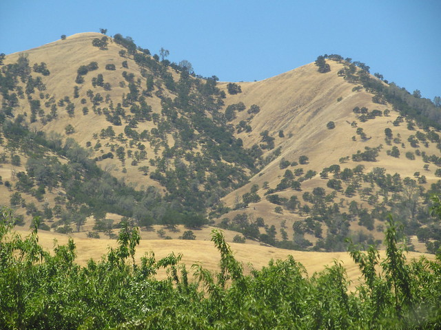 Hills of Summer, Leesvillle Road, Colusa County
