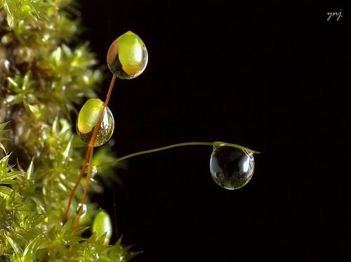 3 Drops