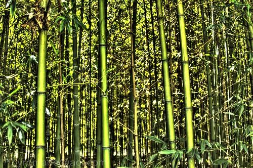 digital canon lens photography eos zoo flickr texas photographer wildlife bamboo tyler dslr lm judas hdr 28135mm caldwell easttexas caldwellzoo 40d lordmalikai canon40d pyromade pyromadeaolcom
