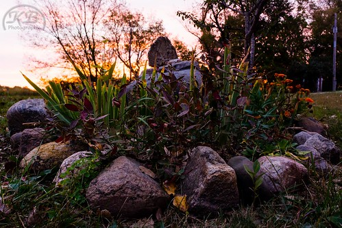 flowers trees sunset plants plant green nature beauty leaves garden landscape evening petals rocks flickr blossom dusk stones ring granite orangesky facebook blooming