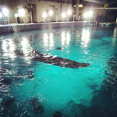 後場看到鯨鯊。