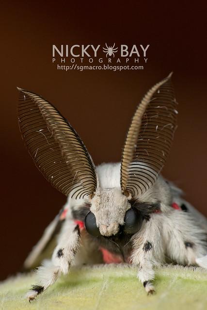 Moth - DSC_5595