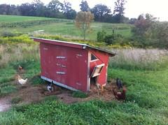 Buckland Farm's chicken coop