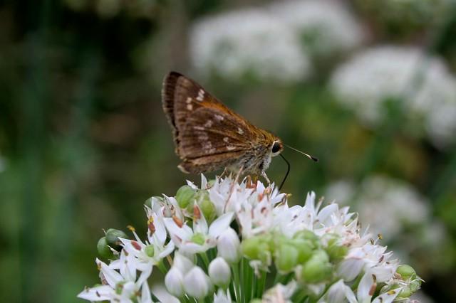 Garden Nosh