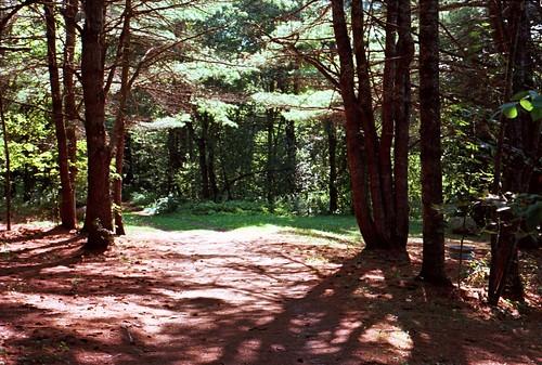 camping vacation film forest nikonem nikon50mmf18afd kodakektar100