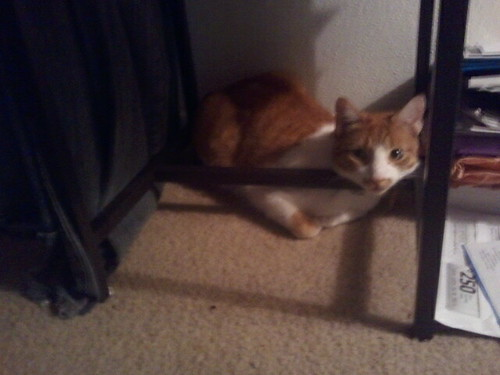 dutch under my chair