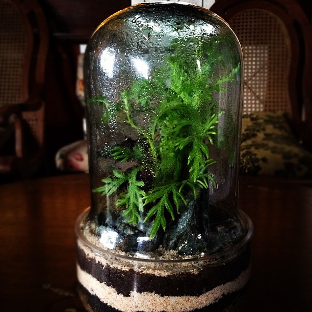 Our beautiful terrarium by Raab.