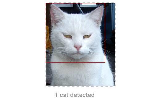 Kittydar5