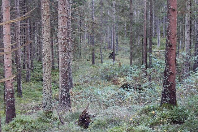 hejregina skog